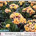 【2014香港花卉展覽:花滿園.樂滿家】
