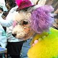 ●20110102●高雄寵物展●
