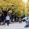 我的東京背影