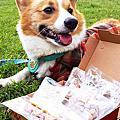 [贊助] Pet Cuisine 寵式料理