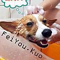 [好物] IRIS寵物澡盆の洗刷刷