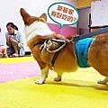 [知識] DINGO台灣 免費成犬體驗課程