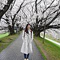 2015 京阪櫻花季