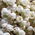 06印度植物篇