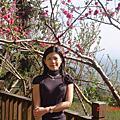 02-22-09台中太原路&苗栗薑麻園櫻花