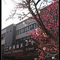 20130215神岡國小.春櫻