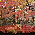 2009.10.30-11.4日本輕井澤東京賞楓之旅