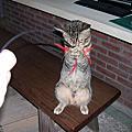 貓寶貝(06~08年)