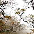 2009.11 翠峰湖山毛櫸步道