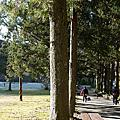武陵櫻花祭前的景色20130117
