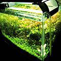 Aquarium 40cm