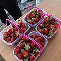 2019。01。26~彰化市草莓園