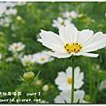 2009.11.15 新社花海 part.1
