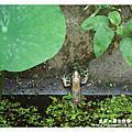 2011.05.07 太平尊天休閒農場