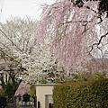 嵯峨野。野宮神社。嵐山。