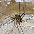 2005.08.25 Spider 7
