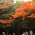 嵐山-野宮神社