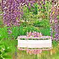 紫藤中的花蛋糕