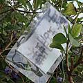 觀山河濱公園秘密花園