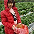日月潭草莓季2019