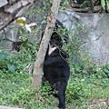 200812 動物園