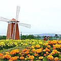台中-再訪中社花市