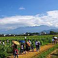 2012新社花海節