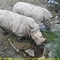 2008.10.25台北動物園
