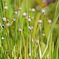水生花草-生態圈