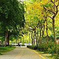 2012-05-27-亞洲大學-阿勃勒