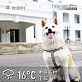 2013-05-19-中興新村
