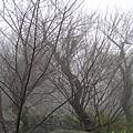 美美的雲霧