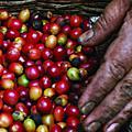 08_咖啡農的覺醒續