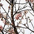 2014.03.15(TW)賞櫻