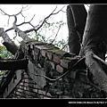 20090208-台南-安平樹屋