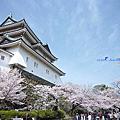 2013當櫻花盛開第3天