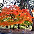 京都御所Kyoto Imperial Palace