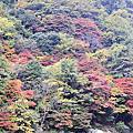 京都 嵐山Arashiyama