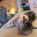 桃園 - 貓餐廳 - 設計