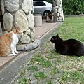 橘貓+黑貓