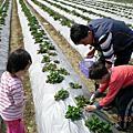 20080316-大岡山草莓園