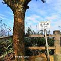 【台中。北屯】台中萬里長城。 編號#41小百岳頭嵙山x四號步道