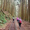 【嘉義。阿里山鄉】走一段震撼的森林秘境~失落的鐵道線。阿里山森林遊樂區~眠月線
