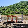 【台東。 鹿野】鄉野間散散步。 武陵綠色隧道x2626市集