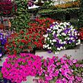 【彰化。田尾】花的饗宴。 田尾公路花園