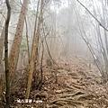 【台中。和平】漫步林間芬多精。 谷關七雄老三~屋我尾山(大雪山林道線)