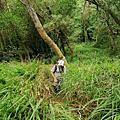 【苗栗。造橋】林相豐富的質樸古道。 口山古道