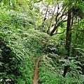 【南投。鹿谷】山野叢林~不斷的陡上陡下。 編號53小百岳鳳凰山1696M~