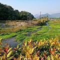 【南投。埔里】悠閒下午茶超好拍的景觀庭園。 Buggy蟲子咖啡