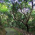 【台中。太平】原始悠靜山林。 淨德寺後山步道